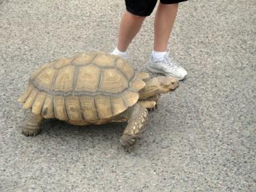 slow turtle crawl to publishing