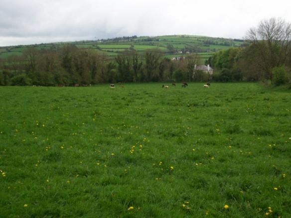Ireland green fields