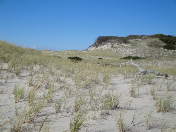 Dune trail at Sandy Neck