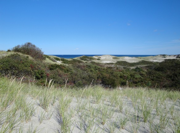 Sandy Neck dune trail