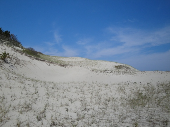 Sandy Neck, Cape Cod