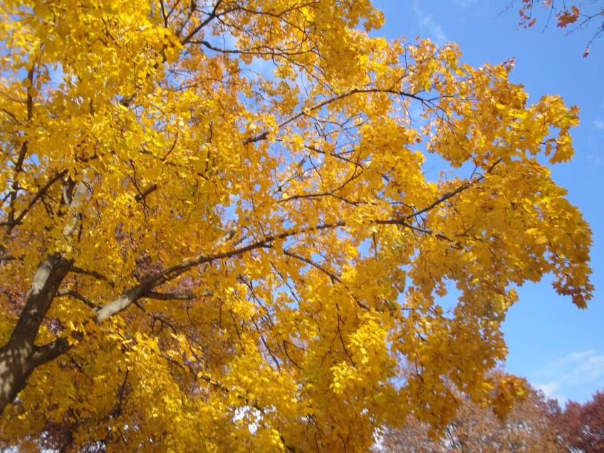 Boston Public Garden fall leaves