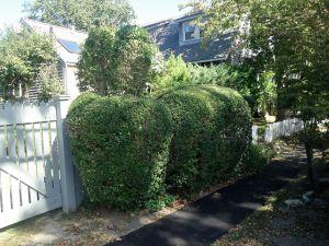 hedge rabbit